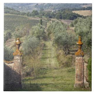 ブドウ園、タスカニー、イタリア タイル