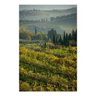 ブドウ園、タスカニー、イタリア フォトプリント