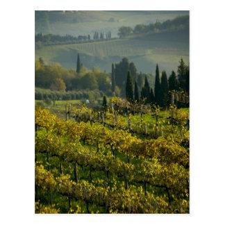 ブドウ園、タスカニー、イタリア ポストカード