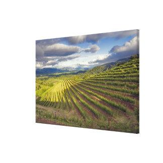 ブドウ園。 Napa Valley。 Napa。 Napa郡、 キャンバスプリント