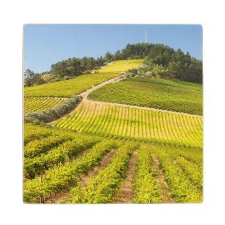 ブドウ園、Stellenbosch、西ケープ州 ウッドコースター