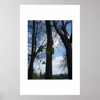 ブナの木 ポスター