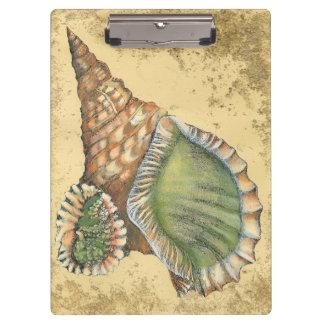ブラウンおよび緑の貝殻 クリップボード