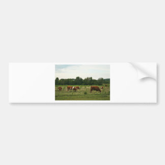 ブラウンおよびHerefordの白い牛 バンパーステッカー