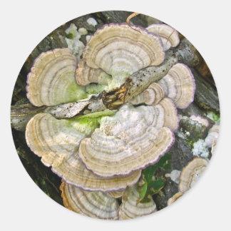 ブラウンのストライプのな棚菌類項目 ラウンドシール