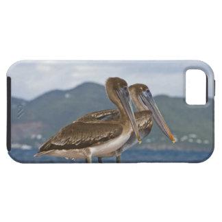 ブラウンのペリカン(Pelecanus Occidentalis) iPhone SE/5/5s ケース