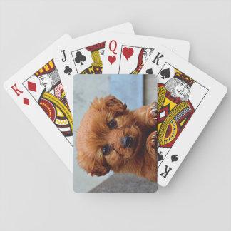 ブラウンの子犬のポートレートの写真 トランプ