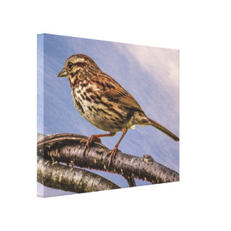 ブラウンの小さい鳥 キャンバスプリント
