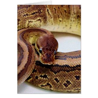 ブラウンの球の大蛇の休息 カード