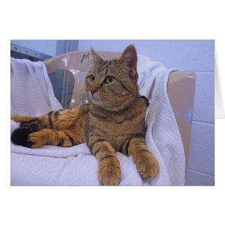 ブラウンの美しい虎猫 カード