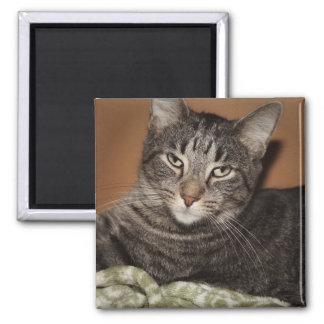 ブラウンの虎猫CATの磁石 マグネット