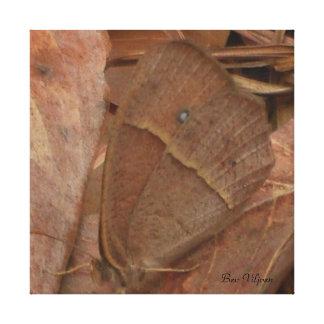 ブラウンの蝶 キャンバスプリント