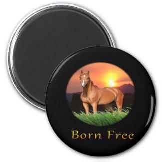 ブラウンの馬は日没を設計します マグネット