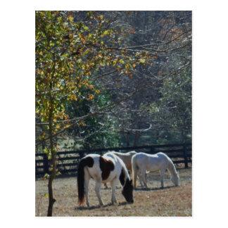 ブラウンの&Whiteの色彩の鮮やかな馬およびクリームの馬 ポストカード