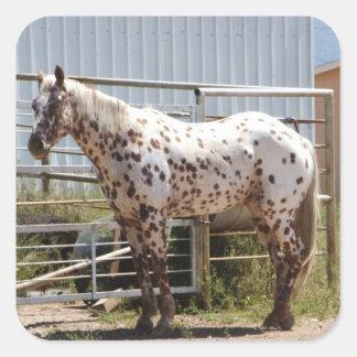 ブラウンはAppaloosaの馬に斑点を付けました スクエアシール