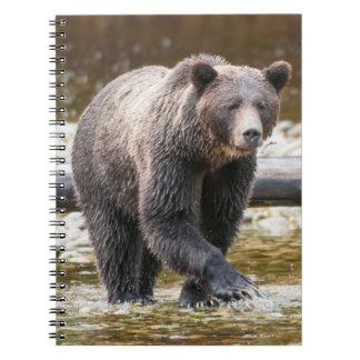 ブラウンまたは灰色グマ(Ursus Arctos)の魚釣り ノートブック
