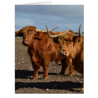 ブラウン大きい高地牛、 カード