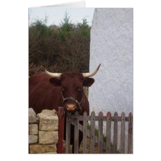 ブラウン牛 カード