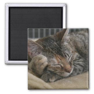 ブラウン睡眠の虎猫の子ネコの磁石 マグネット