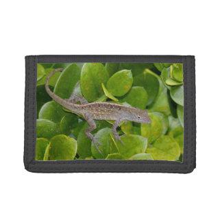 ブラウンAnoleのトカゲの財布 ナイロン三つ折りウォレット