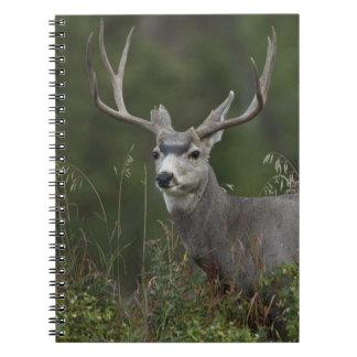 ブラシで拾い読みするラバシカの木びき台 ノートブック