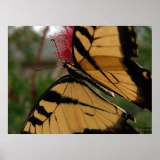 ブラシ、イメージのbyAの蝶。 Agnelli ポスター