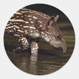 ブラジルのバク、川の側の若い子牛 ラウンドシール