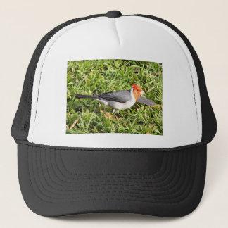 ブラジルの(鳥)ショウジョウコウカンチョウを持つ草 キャップ