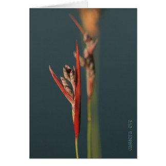 ブラゾス川のくねりの美しい カード