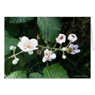 ブラックベリーの花 カード
