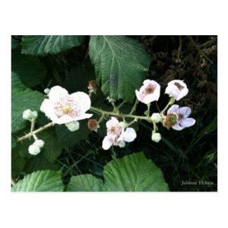ブラックベリーの花 ポストカード