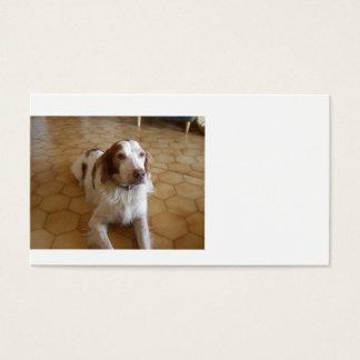 ブリッタニースパニエル犬laying.png 名刺