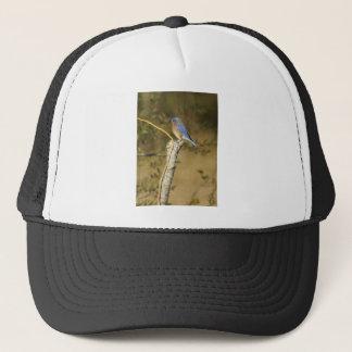 ブルーバードの鳥類学 キャップ