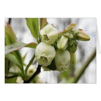ブルーベリーの花 カード