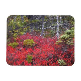 ブルーベリーの薮およびマツ マグネット