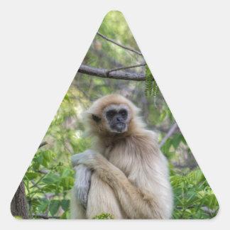 ブロンドのテナガザル猿- Hylobatesのlar 三角形シール