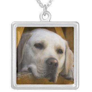ブロンドのラブラドル・レトリーバー犬、パタゴニア、チリ シルバープレートネックレス