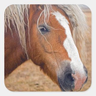 ブロンドの馬 スクエアシール