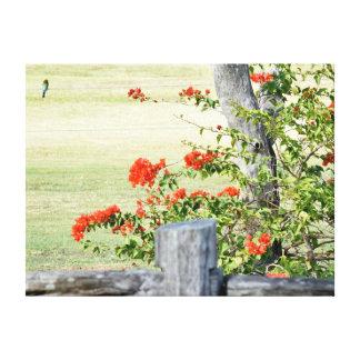 ブーゲンビリアのつる植物及び鳥クイーンズランドオーストラリア キャンバスプリント
