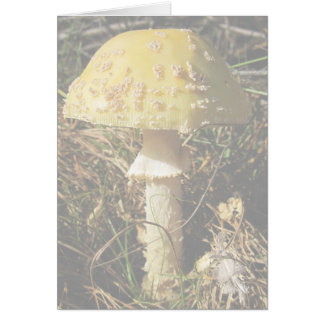 ブーマーの植物の森林 カード