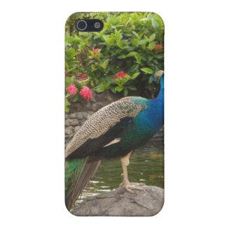プエルトリコの孔雀 iPhone 5 COVER