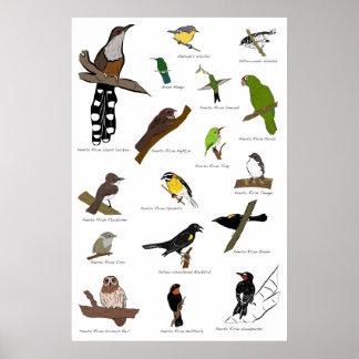 プエルトリコの鳥 ポスター
