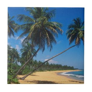 プエルトリコ、Isla Verdeのヤシの木 タイル