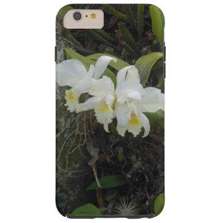 プルメリアの木で育っているCattleyaの蘭 Tough iPhone 6 Plus ケース