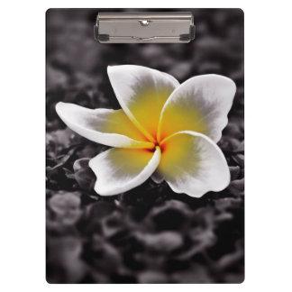 プルメリアのFrangipaniのハワイの花 クリップボード