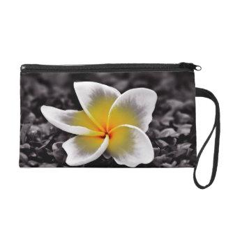 プルメリアのFrangipaniのハワイの花 リストレット