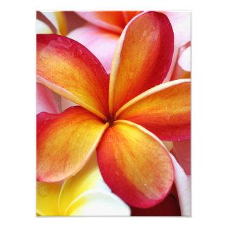 プルメリアのFrangipaniのハワイの黄色く赤い花 フォトプリント