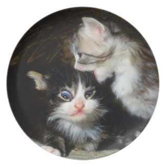 プレート-メインのあらいぐまの子ネコ プレート