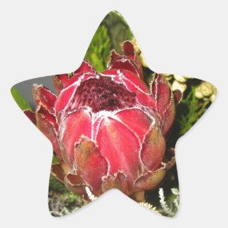 プロテアの花束 星シール