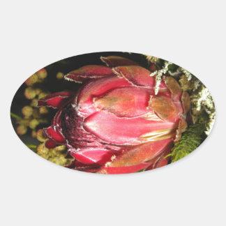 プロテアの花 楕円形シール